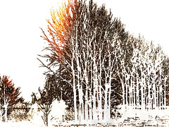 on a sunny winter day (j.p.yef) Tags: peterfey jpyef yef seasons winter landscape trees snow photomanipulation digitalart monochrome selectivecolor sun