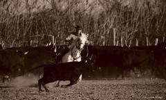 _DSC0684 (chris30300) Tags: camargue cheval