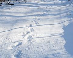 019Jan 29: Snow Tracks 2 (Johan Pipet 2M+ views) Tags: flickr snow sneh zima winter tracks footsteps nature sunny príroda les forest bratislava dubravka hlavica slovakia slovensko eu europe palo bartos bartoš canon g7x