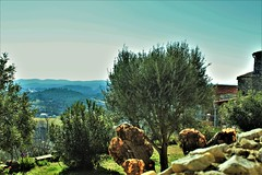 Les roches mystérieuses de Vézénobre (rolyams) Tags: landscape nature tree sky blue green garden jardin olivier arbre herbe paysage tronc cévennes roche vézénobre
