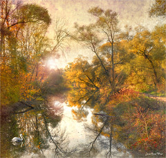 Poppy (Jean-Michel Priaux) Tags: paysage landscape nature river savage tree trees forest poetry rhin rhein alsace france autumn reflect sun sunset sunrise colors paint painting priaux