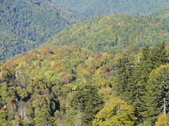 DSC07619 (TerrMys) Tags: northcarolina nc southern appalachians fall autumn october