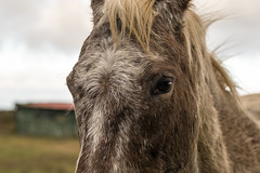 Left side (tonguedevil) Tags: outdoor outside countryside winter nature field sky cloud animal equine horse colour