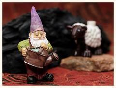Gnome (N.the.Kudzu) Tags: tabletop stilllife resin miniature gnome burnt wood lego duplo sheep rock canondslr meike 85mmf28 macro lens canon430ex flash lightroom preset photoscape frame home