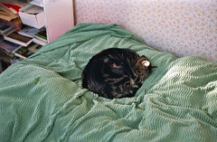 (Chris Hester) Tags: 65 139p baildon cat bert bed