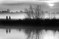 Mist on the meadows (Idreamofpies) Tags: chester cheshire england uk gb united kingdon britain river dee meadows handbridge queens park grass riverbank water tree reflection skyline mist cloud fog silouhette walker black white monochrome sun