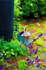 Photo art, Galvanised watering can & water butt (imagesbyhmck) Tags: paintedeffect photoart painterlylook photomanipulation waterbutt wateringcan scotland highlandregion invernesshire lochaber invercaimbe westcoastscotland flora plants dicotyledons floweringplants toadflax linaria purpurea