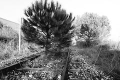 Disused railway (srouve78) Tags: disused voie ferrée desaffectée railway noiretblanc