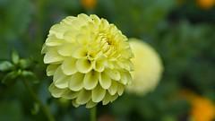 #Leverkusen   #Photography   #Fotoğrafçılık   #flowers   #Macro   #Sony  a 77 V  #landscapephotography #Sonbaharrenkleri #FOTUGRAFCILIK #hdrphotography #sony #A #77V #SonyFOTUGRAFCILIK #photography #photo #photos #photographyeveryday #ig_shutterbugs #phot (fu_lintkhac) Tags: fotoğrafçılık photooftheday a color macro fotugrafcilik focus pic photos pictures moment sonyfotugrafcilik beautiful sony landscapephotography igshutterbugs composition photographylovers leverkusen photographer photographyeveryday hdrphotography instagood flowers art sonbaharrenkleri photo capture instaphotography photography picoftheday mobilephotography allshots exposure light 77v photoart snapshot