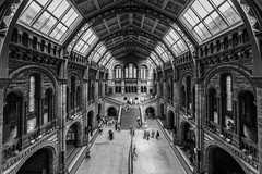 London classic (Blende1.8) Tags: london england uk unitedkingdom naturalhistorymuseum hall halle wideangle ultraweitwinkel sigma1224mmhsmii 1224mm nikon d610 museum architecture architektur interior classic klassiker old historic historischegebäude symmetry people museumsbesucher ceiling dachfenster glasdach roof glass glassroof