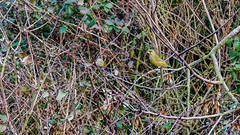 Nettlehill Circular Walk 6th January 2019 (boddle (Steve Hart)) Tags: stevestevenhartcoventryunitedkingdomcanon5d4 nettlehill circular walk 6th january 2019 steve hart boddle steven bruce wyke road wyken coventry united kingdon england great britain canon 5d mk4 6d 100400mm is usm ii 2470mm standard dji fc2103 mavic air wild wilds wildlife life nature natural bird birds flowers flower fungii fungus insect insects spiders butterfly moth butterflies moths creepy crawley winter spring summer autumn seasons sunset weather sun sky cloud clouds panoramic landscape 360 arial rugby unitedkingdom gb