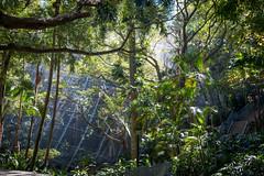 Volière à Hong Kong Park (Seb & Jen) Tags: hongkong asia asie park parc island voliere bird oiseau