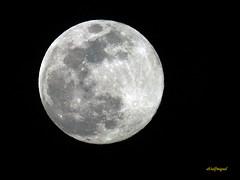 LA LUNA HOY 20-03 -2019 (3) (eb3alfmiguel) Tags: astronomía luna llena