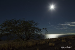Orion and Moon Over Big Island_27A8229 (Alfred J. Lockwood Photography) Tags: alfredjlockwood nature landscape nightscape seascape orion orionsbelt fullmoon pacificocean tree grasses bigisland hawaii winter stars clouds goalzerolighthouseminilantern lowlevellighting lightpainting
