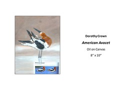 "American Avocet • <a style=""font-size:0.8em;"" href=""https://www.flickr.com/photos/124378531@N04/46790295821/"" target=""_blank"">View on Flickr</a>"