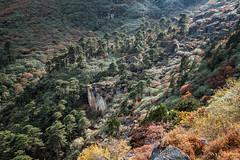 Trees on the mountainside en route to Tampoe Tsho - Wangdue Phodrang district - Snowman Trek - Bhutan (PascalBo) Tags: nikon d500 asie asia southasia asiedusud drukyul drukgyalkhap bhutan bhoutan འབྲུག་ཡུལ། འབྲུག་རྒྱལ་ཁབ་ snowman trek trekking hike hiking lunana wangduephodrang himalaya himalayas forest arbre tree vegetation forêt montagne mountain landscape paysage outdoor outdoors pascalboegli