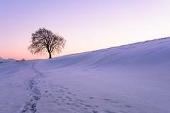 Smooth evening glow (karo.perez73) Tags: landschaft abendrot bayern tree