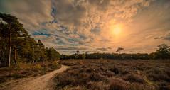 There's always a way with a path. (Alex-de-Haas) Tags: 11mm adobe adobelightroom aurorahdr aurorahdr2019 blackstone d850 dutch europa europe european hdr holland irix irix11mm irixblackstone lightroom limburg molenhoek mook mookerheide nederland nederlands netherlands nikon nikond850 skylum autumn beautiful beauty bomen boom bos cirrus cloud clouds colorful colourful fall forest heide herfst landscape landschaft landschap mooi nature natuur park pretty schoonheid sky skyscape sundown sunset tree trees warm wolk wolken woods zonsondergang