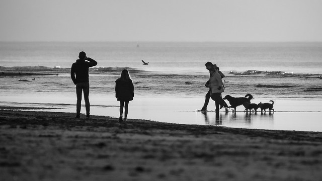 Only fools & dogs - B&W - B