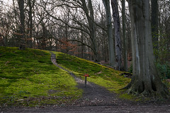 Reserved moss (Julysha) Tags: elswout moss forest park thenetherlands noordholland february winter 2019 acr d850 sigma241054art trees path evening