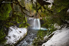 Ice, moss, dogs, and slides (Matt Straite Photography) Tags: ice water waterfall river snow winter cold tobogon landscape oregon trail hike koosah canon tripod moss trees forest kids dog dogs slide