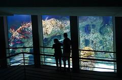 National Aquarium, Baltimore, MD (SomePhotosTakenByMe) Tags: nationalaquarium aquarium urlaub vacation holiday usa america amerika unitedstates maryland baltimore stadt city innenstadt downtown indoor
