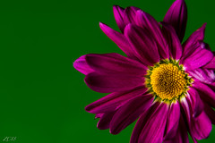 Green light. (Snap.off) Tags: fantasticnature bloom blooms naturelovers natureza naturephotography nature sonyimages sonya7r2 sonya7rii sonyemount sonyalpha 5518za carlzeiss zeiss floral botanical hotcolors colors colorful closeup macrophotography macro flowers flower