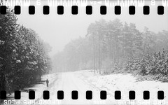 Bronica SQ-A-060-004 (michal kusz) Tags: bronicasqa zenzanon 110 135 35mm 120to135 frame film bw blackandwhite landscape forest format monochrome medium monochromatic trees snow poland