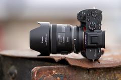 SONY ⍺7RII & Canon EF35/2 IS on Sigma MC-11 by SONY ⍺7III & Sigma FE 1.8/135 Art (.: mike | MKvip Beauty :.) Tags: sony⍺7rmarkii sony⍺7rii sonyilce7rm2 sonyalpha7rm2 sonyalpha sony alpha emount ⍺7rii ilce7rm2 canonef35mmƒ2isiiusm canon ef35mmf2isiiusm 35mmf2 is usm sigmamountconvertermc11ef sigmamc11 sigma eftoemount adapter sony⍺7markiii sony⍺7iii sonyilce7m3 sonyalpha7m3 ⍺7iii ilce7m3 ibis sigmafe135mmƒ18dghsm| art 135mmƒ18 primelens prime manualexposure handheld availablelight naturallight backlight backlighting shallowdof bokeh bokehlicious beyondbokeh extremebokeh smoothbokeh lensporn cameraporn gearshot spring karlsruhe germany europe mth mkvip sigmamountconvertermc11efe sigmafe135mmƒ18dghsm|art