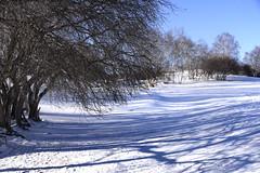 Trees (MelindaChan ^..^) Tags: innermongolia bashang china 內蒙古 壩上 trees line plant snow snowscape nature chanmelmel mel melinda melindachan