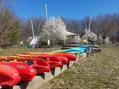 2019 Bike 180: Day 38 - Boats Bike Blossoms (mcfeelion) Tags: spring lakeaccotinkpark cycling bike bicycle bike180 2019bike180 springfieldva
