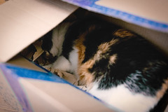 Box Dweller (donnicky) Tags: box cat closeup domesticanimal home indoors lying nopeople oneanimal pet publicsec relaxation sleeping лилу