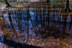 Fotovagando (kiareimages1) Tags: spring reflections trees water sky imagery wood marcinelle charleroi belgium