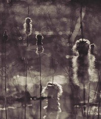 springTails (blancopix) Tags: cattails multiexposure nature sliderssunday hss
