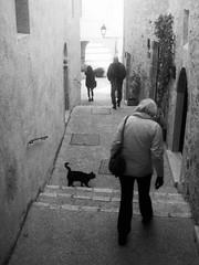 080419001 (francescoccia) Tags: analog francescoccia 110 110film pocketfilm lomography lomo orca bn bw blackwhite pentaxauto110 pentax reflex analogue spoleto umbria gatto nero cat