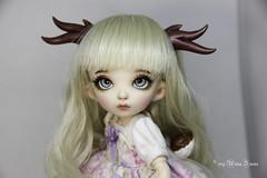 Deer antlers for tiny (AnnaZu) Tags: deer antlers horns