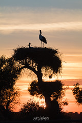 DelPréstamo - 2019   -   1-12 (Del_Préstamo) Tags: naturaleza cigüeñas aves reservanatural
