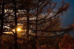 Sun (petia.balabanova(tnx for +3 million views)) Tags: sun sunrays tree colors nikon nikond800 2470mm forest nature