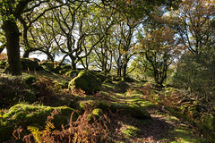 Mossy rocks - NK2_6560 (Jean Fry) Tags: burratorarea dartmoor dartmoornationalpark devon englanduk moss trees uk westcountry woodland autumn boulders mossyboulders mossyrocks nearnewleycombelake rocks newleycombelake riverside