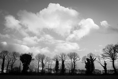 Nus (Xnoszam) Tags: arbres nus monochrome nb bretagne brocéliande paimpont