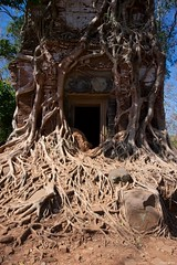 IMGP4627 Roots of life (Claudio e Lucia Images around the world) Tags: kohker angkorwat siemreap cambodia angkor wat nature revenge cambogia tempio khmer ancient asceta pentax pentaxart tree roots ficus tomb rider lara croft statue winner power legno rovine pentaxk3ii sigma sigmalens sigma1020 sigmaart albero