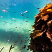 Underwater at Blairgowrie Pier-63