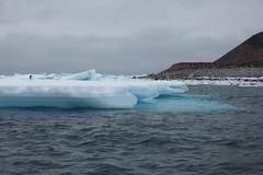 IMG_3305 (y.awanohara) Tags: adelie adeliepenguins penguins antarctica antarcticpeninsula wildlife january2019 icebergs ice icefloes crabeaterseals