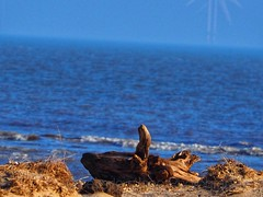 Drift wood (Artybee) Tags: gibraltar point lincolnshire olympus mirrorless camera em10