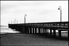 Seven Birds Sitting (greenschist) Tags: california usa cayucos pacificocean asahipentaxspotmaticii pier kodaktrix400 blackwhite film supertakumer55mmf18 35mm analog cayucospier