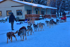 Chena Husky Kennel, Alaska (R-Gasman) Tags: travel chenahuskykennel alaska usa