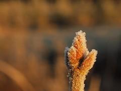 Zurück in die Eiszeit (photohml) Tags: photograf eiszeit eis ice frozen gefroren winter macro makro nahaufnahme bokeh details outside dof depthoffield olympus zuiko 50mm e620
