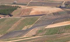 Vitigni langaroli. Barolo (CN) Piemonte, Italia (giuselogra) Tags: barolo vine vitigni vite vino uva piedmont piemonte italy italia langhe lamorra uvebarolo langa wine agriculture agricoltura