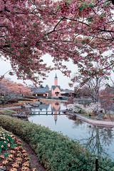 Nagashima Resort (mikemikecat) Tags: kawazu cherry blossom tree mie prefecture nagashima resort なばなの里 河津桜 河津櫻 カワヅザクラ flower nature building exterior flowering plant growth no people outdoors springtime mikemikecat travel