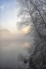 Adda river (fabrizio daminelli ) Tags: alba sunrise italy fabriziodaminelli canon lombardy lombardia wildlife natura nature landscape paesaggio sole sun fog nebbia river fiume adda